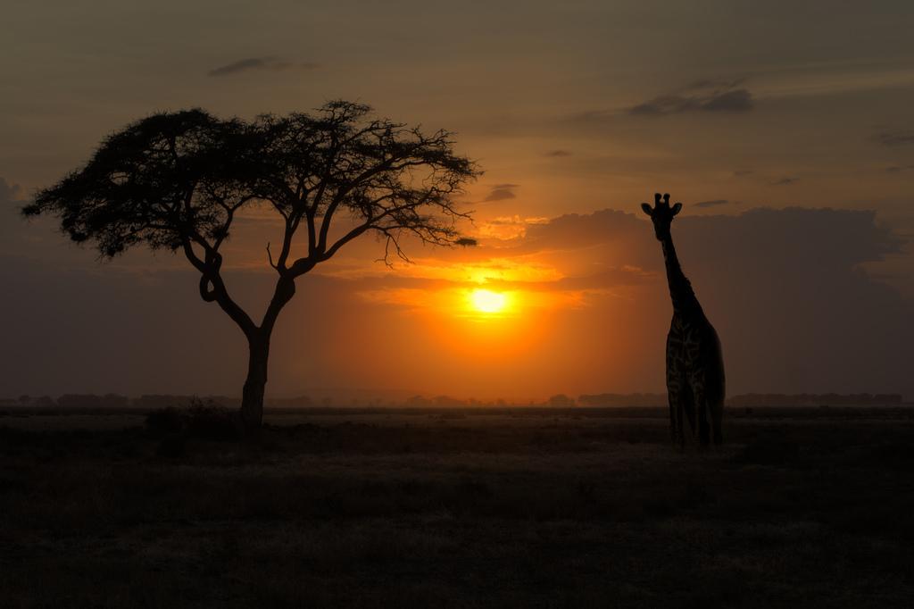 tramonto Serengheti