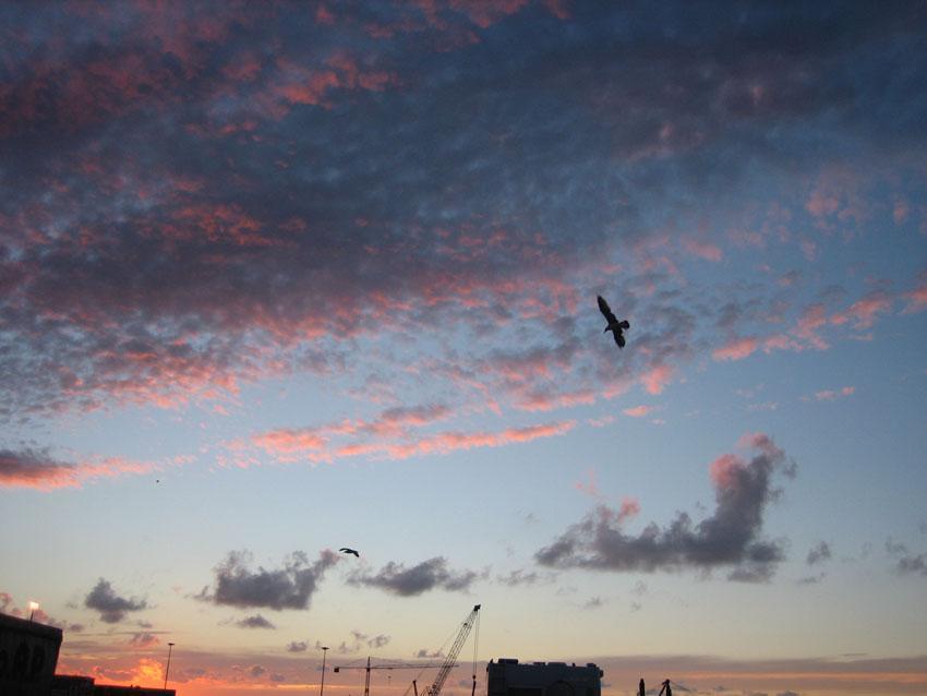 tramonto in città con volo solitario tra le nuvole foto di tramonti foto tramonto immagini volo