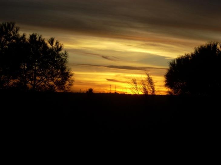 foto al tramonto in tramonto nel bosco