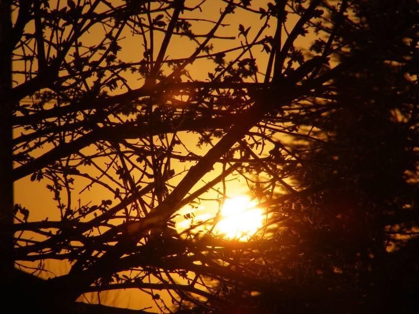 Foto scattata al tramonto in un sottobosco…