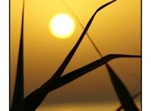 tramontob