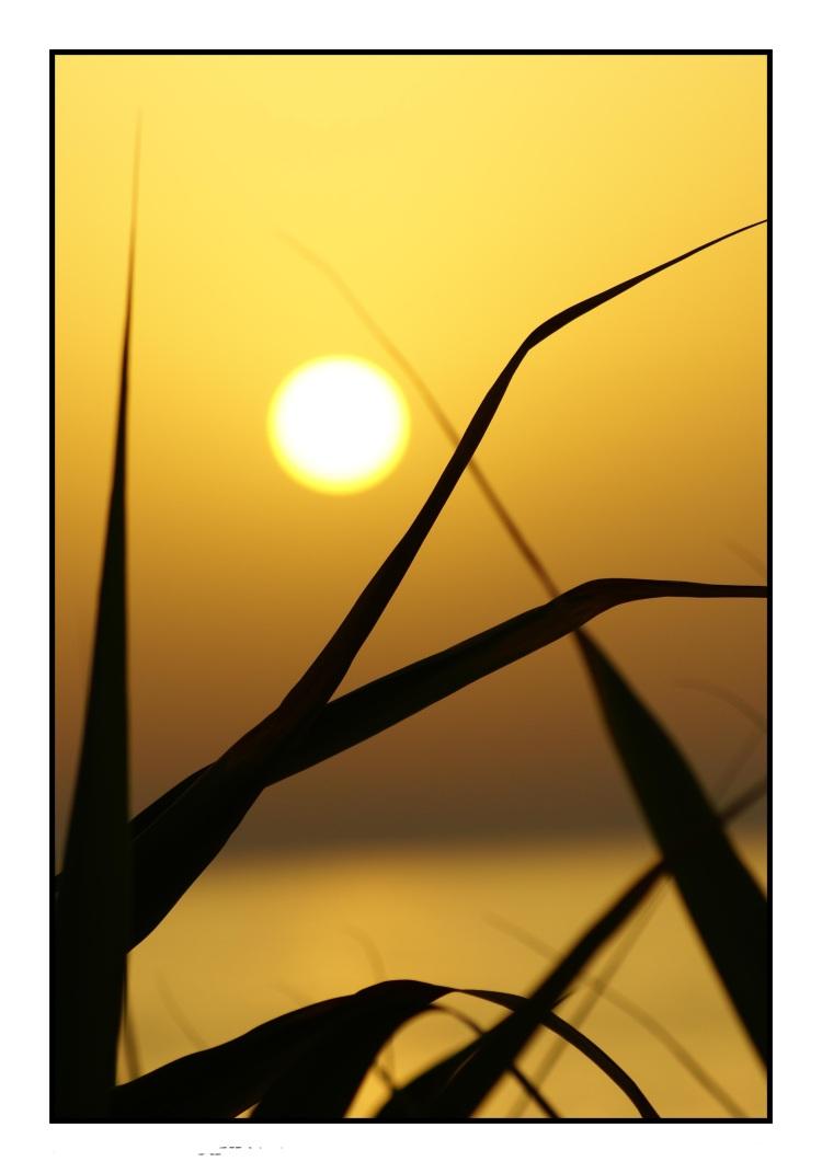 tramonto sfumato con intrecci foto di tramonti foto al tramonto